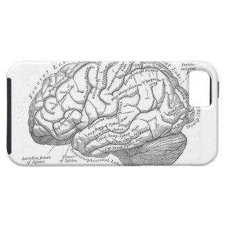 Anatomía del cerebro del vintage iPhone 5 funda