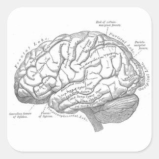 Anatomía del cerebro del vintage pegatina cuadrada