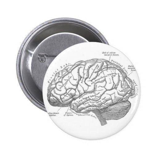 Anatomía del cerebro del vintage pin