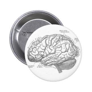 Anatomía del cerebro del vintage pin redondo de 2 pulgadas