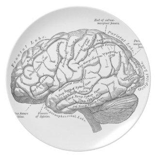 Anatomía del cerebro del vintage plato de cena