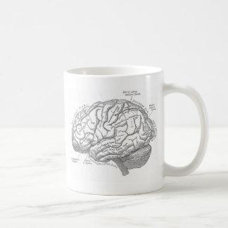 Anatomía del cerebro del vintage taza de café