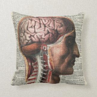 Anatomía del cerebro humano cojines
