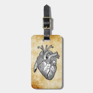 anatomía del corazón del vintage etiquetas maletas