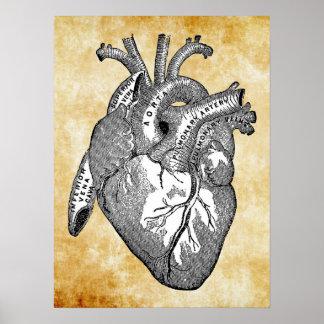 anatomía del corazón del vintage impresiones