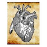 anatomía del corazón del vintage postales
