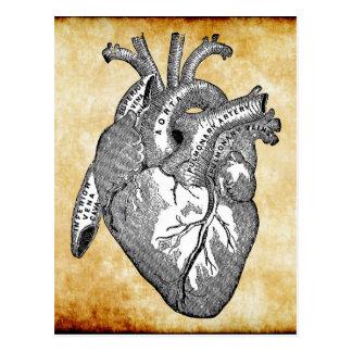 anatomía del corazón del vintage tarjetas postales