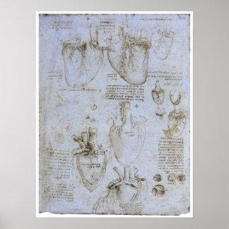Anatomía del corazón humano, Leonardo da Vinci Póster