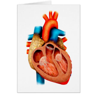 Anatomía del corazón humano, seccionada tarjeta de felicitación