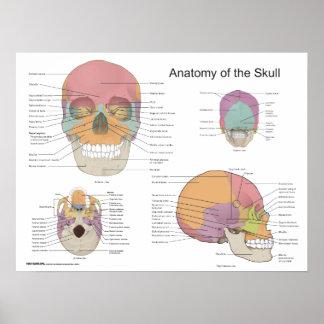Anatomía del cráneo humano 18 x 24 póster