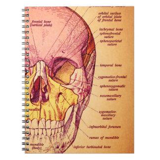 Anatomía del cráneo libro de apuntes con espiral