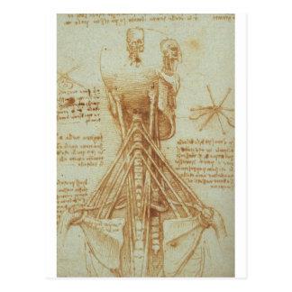 Anatomía del cuello de Leonardo da Vinci C. 1515 Postal