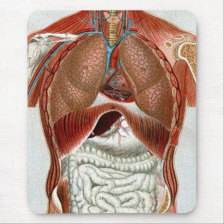 Anatomía del cuerpo humano alfombrilla de ratones