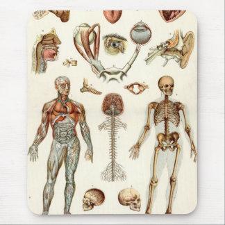 Anatomía del cuerpo humano alfombrillas de ratón