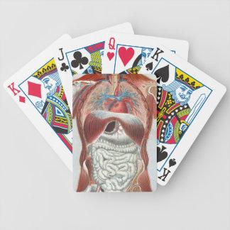 Anatomía del cuerpo humano baraja de cartas