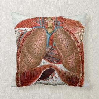 Anatomía del cuerpo humano cojines