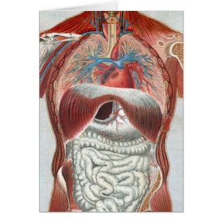 Anatomía del cuerpo humano felicitación