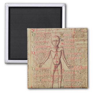 Anatomía del cuerpo humano imán cuadrado