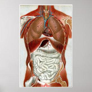 Anatomía del cuerpo humano impresiones