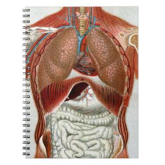 Anatomía del cuerpo humano libreta espiral