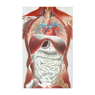 Anatomía del cuerpo humano lona envuelta para galerias