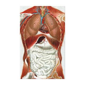 Anatomía del cuerpo humano impresión en lienzo estirada