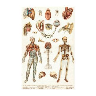 Anatomía del cuerpo humano lona estirada galerias