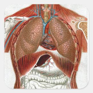 Anatomía del cuerpo humano calcomanía cuadrada personalizada
