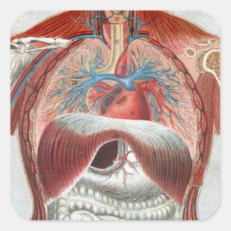 Anatomía del cuerpo humano pegatinas