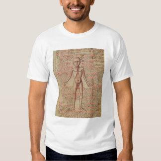 Anatomía del cuerpo humano polera