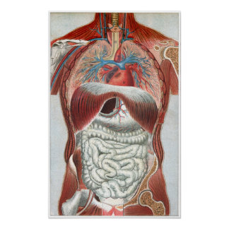 Anatomía del cuerpo humano poster