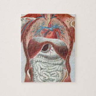 Anatomía del cuerpo humano puzzle con fotos