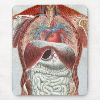 Anatomía del cuerpo humano tapete de raton