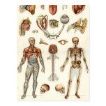 Anatomía del cuerpo humano tarjeta postal