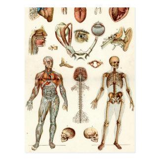 Anatomía del cuerpo humano tarjetas postales