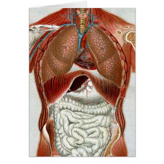 Anatomía del cuerpo humano tarjetón