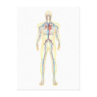 Anatomía del cuerpo humano y del sistema impresión en lienzo estirada