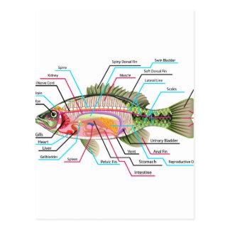Anatomía del diagrama del arte del vector de los postales