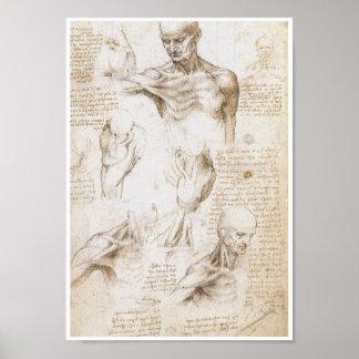 Anatomía del hombro, Leonardo da Vinci Póster