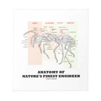 Anatomía del ingeniero más fino de la naturaleza blocs