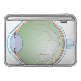 Anatomía del ojo humano fundas MacBook