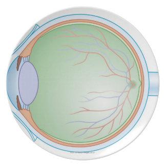 Anatomía del ojo humano platos para fiestas