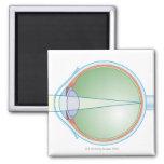 Anatomía del ojo imán cuadrado