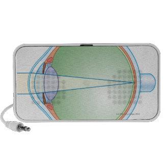 Anatomía del ojo iPhone altavoz