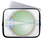 Anatomía del ojo mangas portátiles