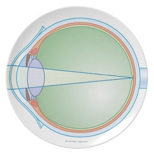 Anatomía del ojo plato para fiesta