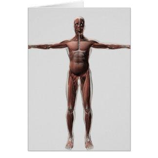 Anatomía del sistema muscular masculino, vista felicitacion