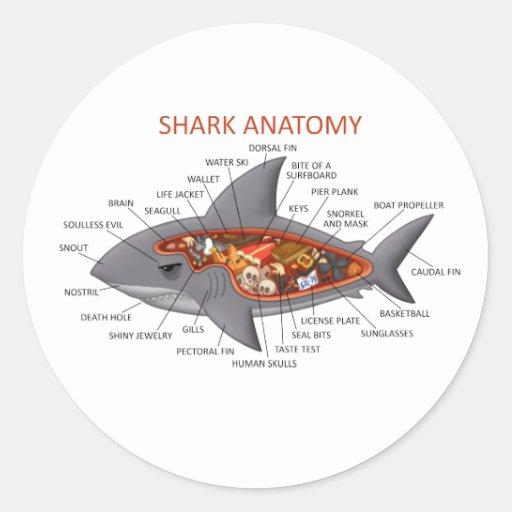 Anatomía del tiburón etiquetas