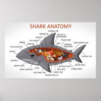 Anatomía del tiburón impresiones