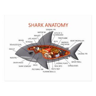 Anatomía del tiburón postal